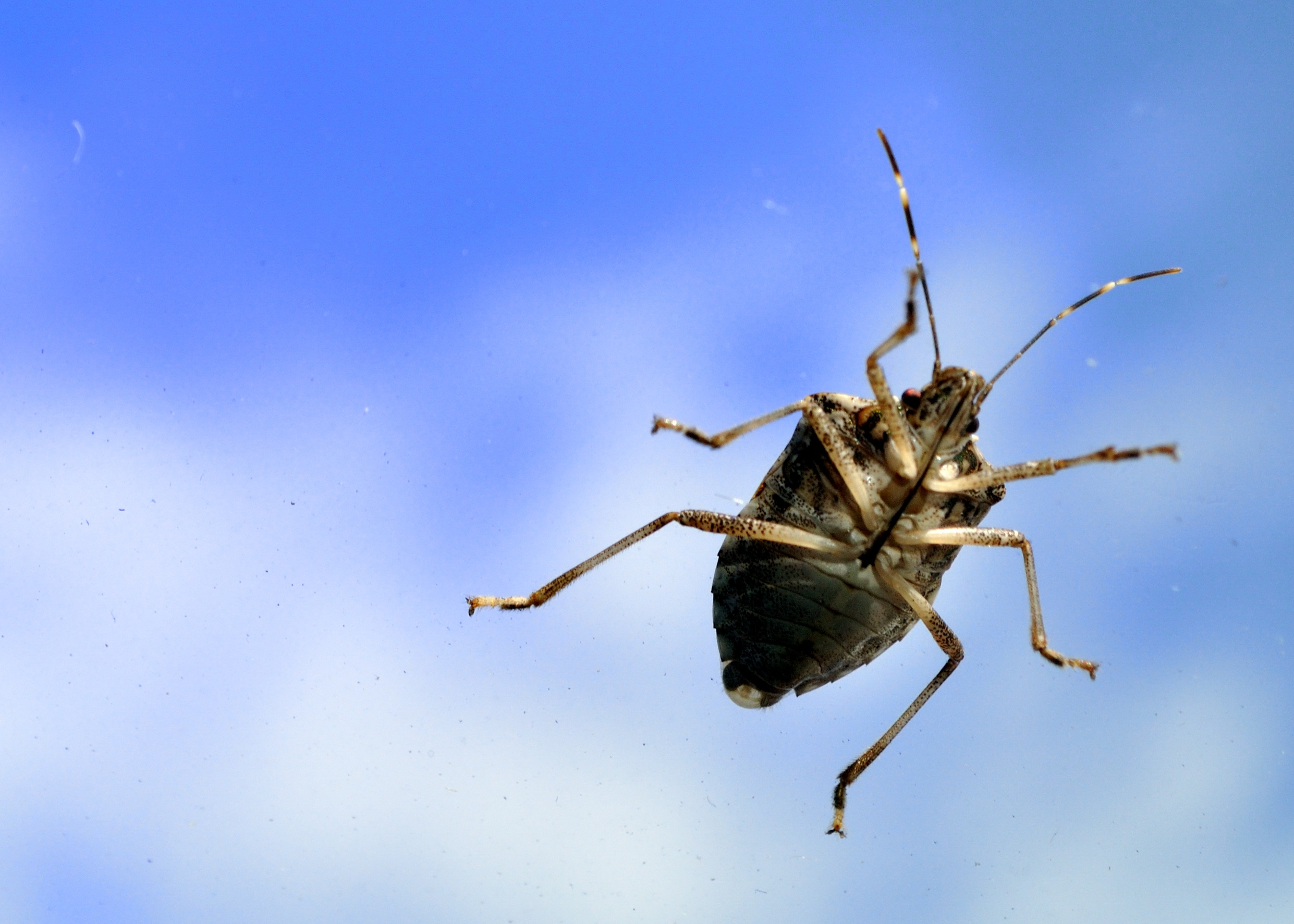 Bug cleaner